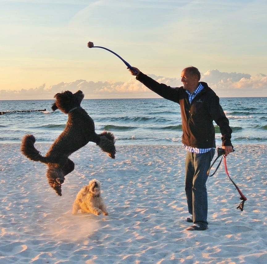 Man playing with a dog on a beach